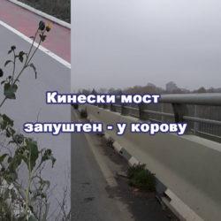 """Мост """"Михајла Пупина"""" (Кинески мост) између Борче и Земуна  зарастао у коров"""