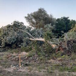 Зауставити уништавање зеленила на Булевару Европе у Новом Саду